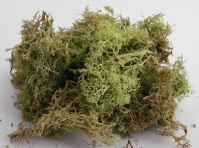 LICHEN/MOSS - LIGHT GREEN - Small Pack