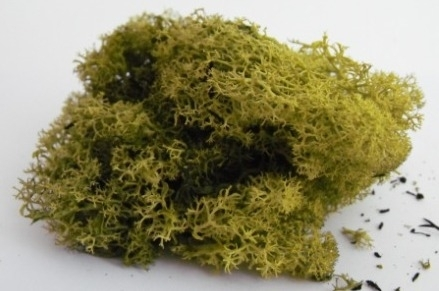 LICHEN/MOSS - MEDIUM GREEN - Small Pack