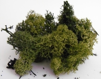 LICHEN/MOSS - DARK GREEN - Small Pack