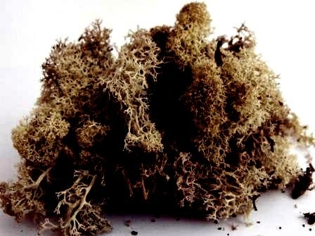 LICHEN/MOSS - AUTUMN BROWN - Small Pack