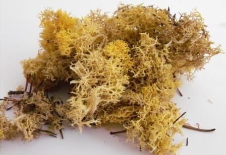 LICHEN/MOSS - AUTUMN YELLOW - Small Pack